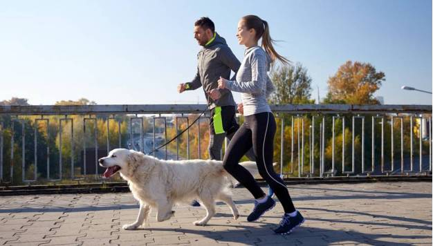 Hardlopen met je hond in het nieuwe jaar