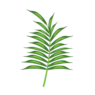 Organic Saw Palmetto Capsules