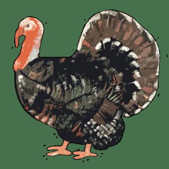 Whole Turkey (Bronze)