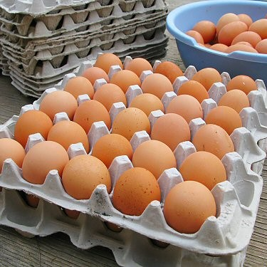 Flower Farm Free Range Eggs