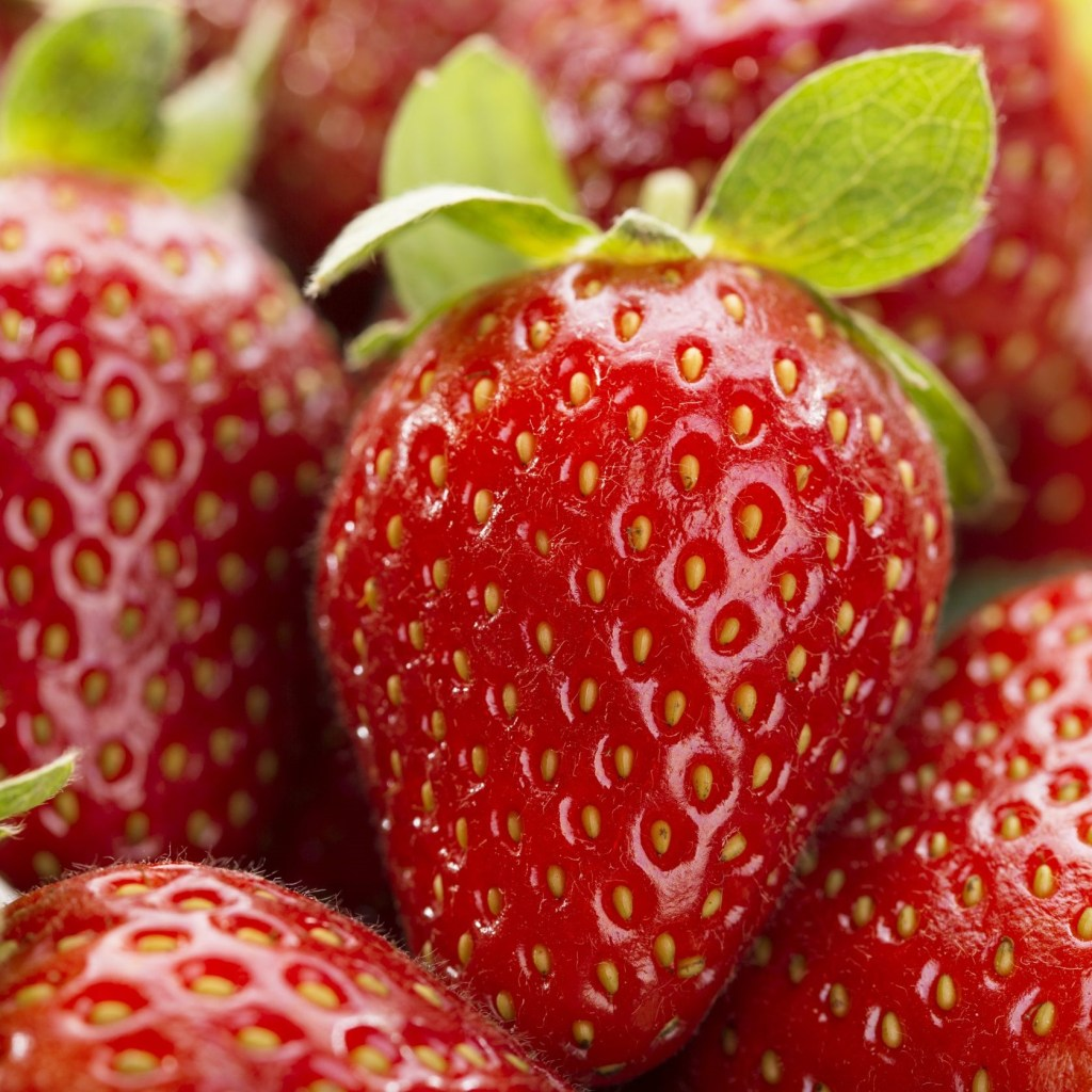 Strawberries Pack