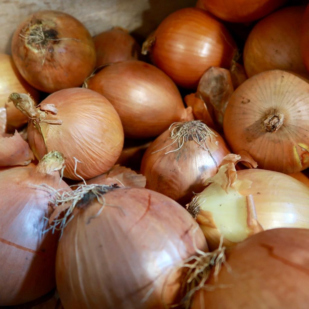 Spanish Onions (2)