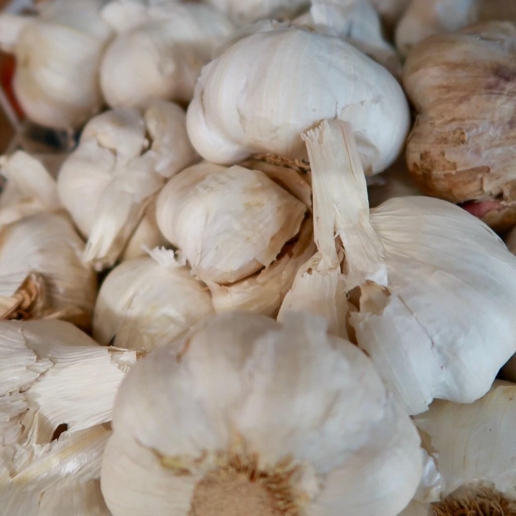 Garlic (4)