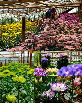 Flower Depot Flower Farm