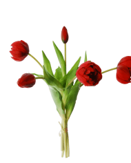 Red tulips | peony tulips in a bundle of 5 with a bud