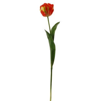 Tulip-on-a-stem-red-yellow-62-cm