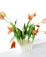 orange-and-pink-green-tulips-in-5×7