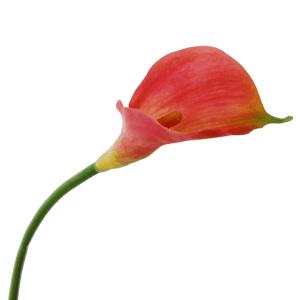 flowerdutchess-calla-lily-spray-91-cm-mauve