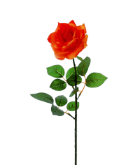 Flowerdutchess-rose-orange-2