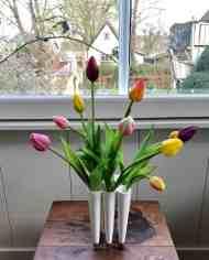 FlowerDutchess-tulips-3×3-1