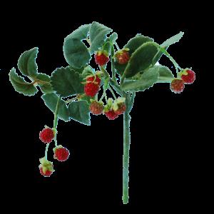 FlowerDtuchess   Wilde aarbeitjes   29 cm