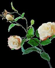 FlowerDutchess-rozen-tak-poederroze-grote-rozen-90cm