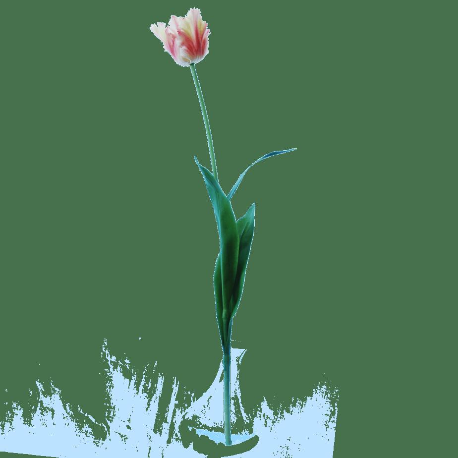 FlowerDutchess-Parkiet-tulp-roze