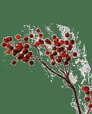 FlowerDutchess-Bessentak-85cm-rood-oranje-5