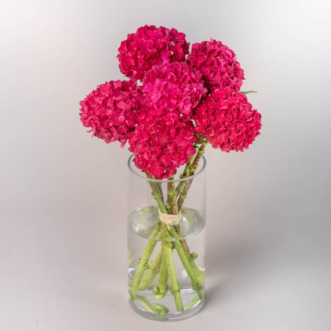 Flowerist | Bouquet of pink hydrangeas