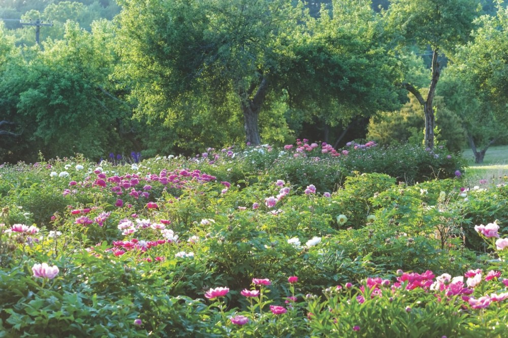 Zezé's Flower Farm