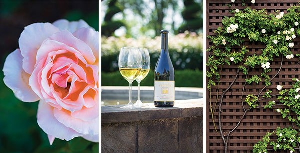 Left: One of the 3,000 roses of 31 varieties that lives at Newton. | Middle: A bottle of Newton's famous unfiltered chardonnay (the casks of which are stored under the parterre garden) is perched on the fountain's edge. Other premiere unfiltered wines of Newton Vineyard include merlot and cabernet sauvignon. | Right: Roses climb gamely up the trellis of the winery.