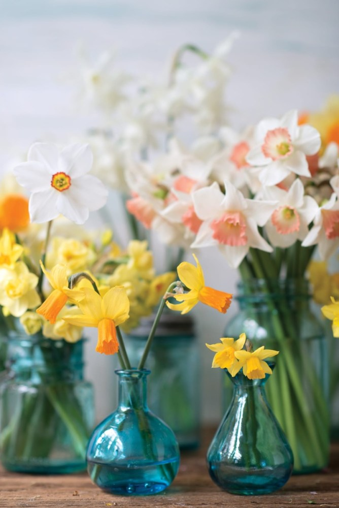 What Flower Are You Quiz Flower Magazine Home Lifestyle