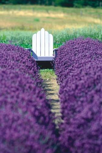 KL_chair-in-field_Purple-Haze