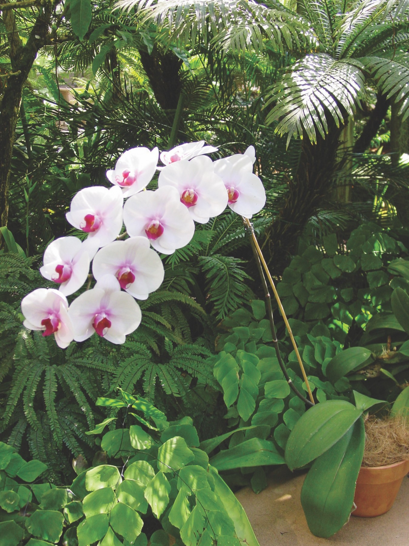 How to grow orchids at home 38