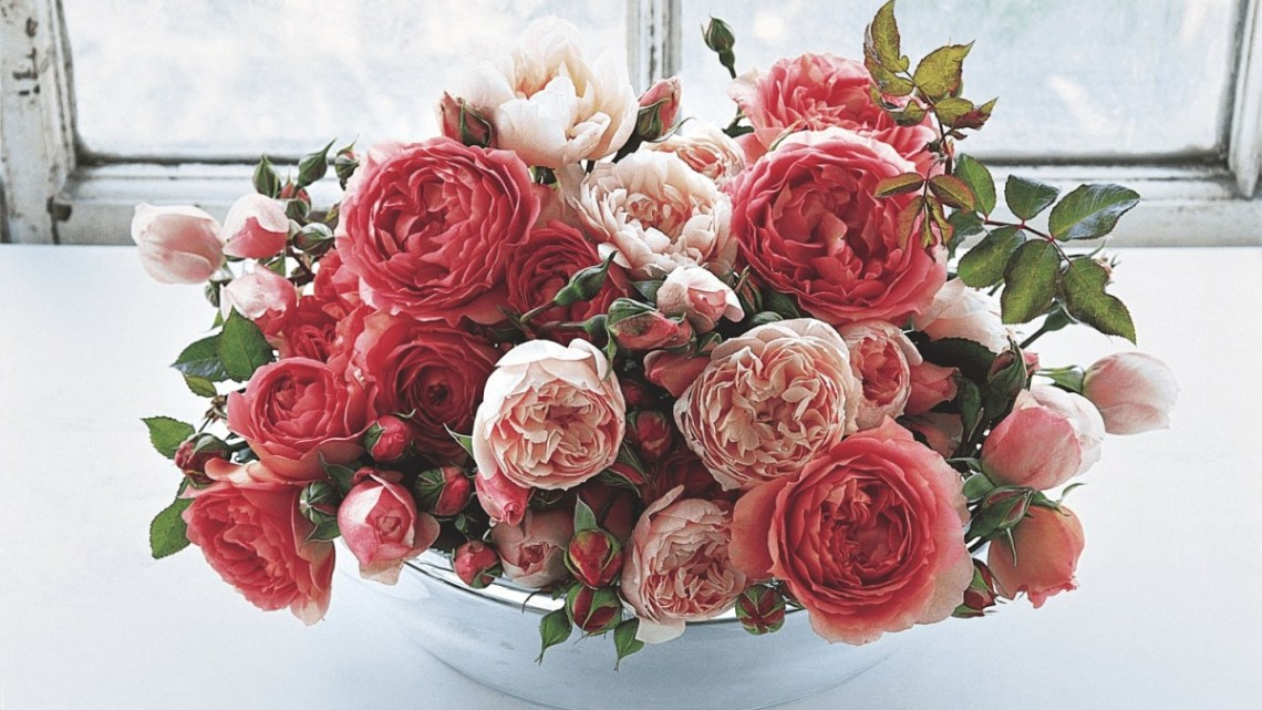 English garden roses, english roses