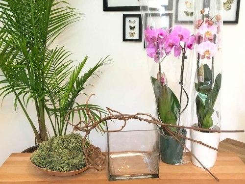 dress up an orchid, arranging orchids