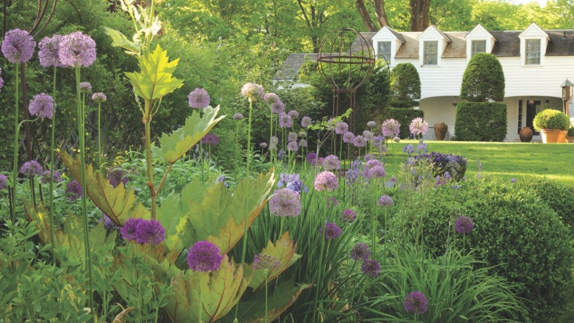 Bunny Williams' garden, alliums