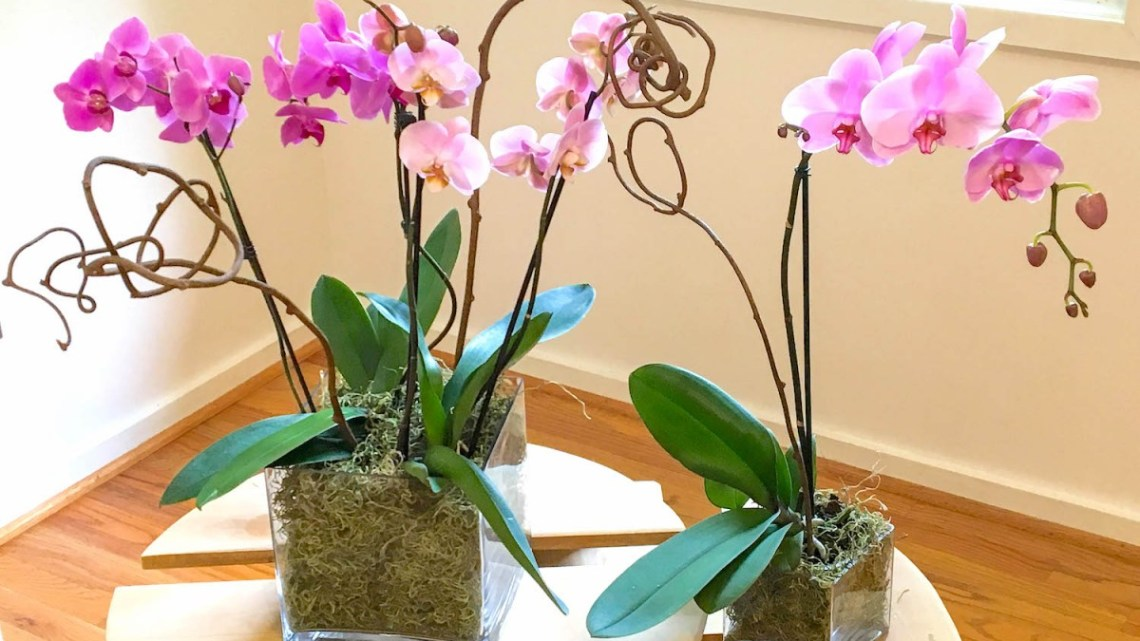 arranging orchids, dress up an orchid