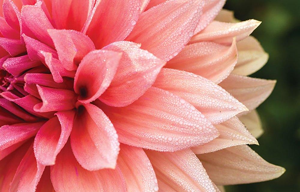 coral flower arrangements, pantone 2019 living coral