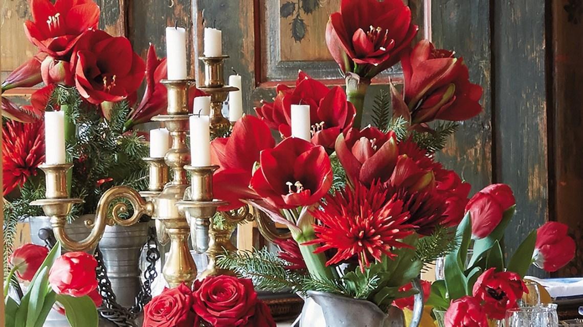 amaryllis arrangements, amaryllis flowers