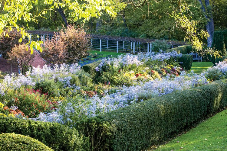 Photo of herbaceous flowers bordered by a boxwood hedge designed by Beatrix Farrand