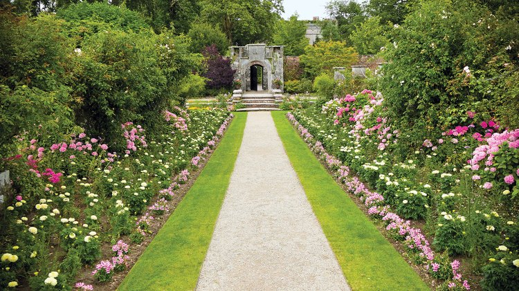 Photo of a narrow, straight gravel path leading to the garden wall at Dromoland Castle. The path is lined on either side by a strip of grass, a row of low-growing pink flowers, a row of white roses, a row of taller light pink and hot pink roses, and finally a row of various taller shrubs, some flowering.