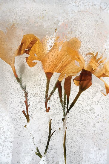 """Daylily"" by Sam Stapleton"