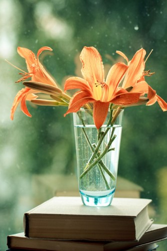 three orange daylily blooms in a glass on a stick of books by a window