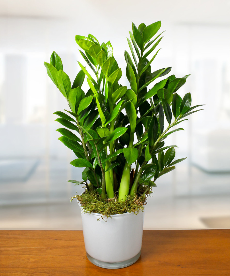Houseplant Appreciation Day The Benefits Of Houseplants Currans Flowers