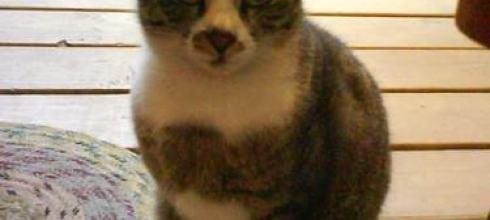 【花食記】貓薄荷~手工蛋糕&小貓在旁