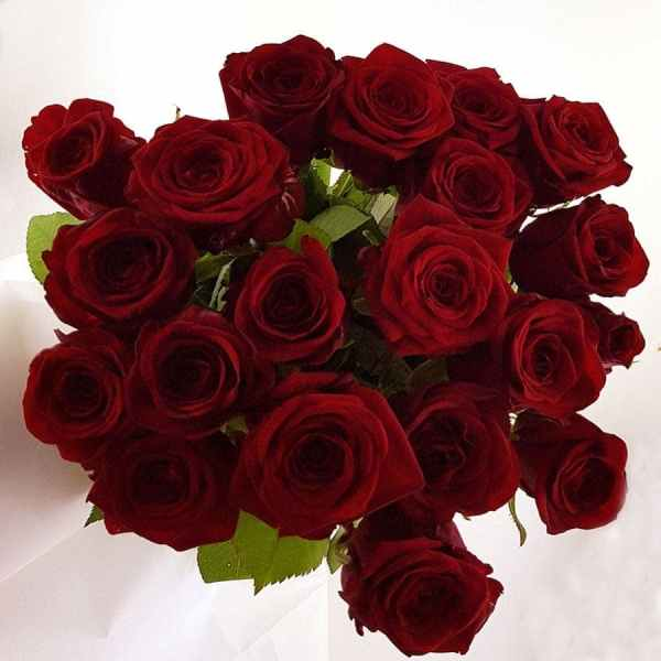 20 rote Rosen