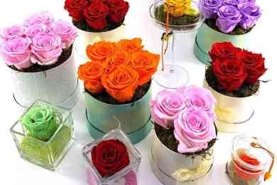Ewige Rosen Gruppe 2