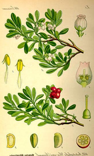 Berendruif