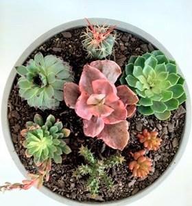 Lge Bowl Succulent
