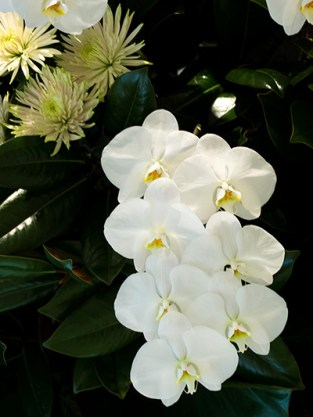 A spray of white orchids.