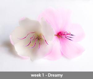 Tibouchina week 1