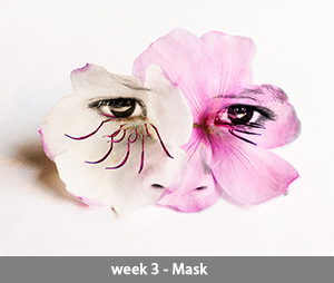 Tibouchina week 3
