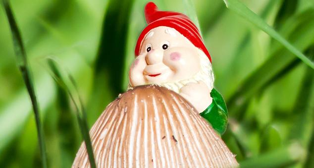 Garden Close-Up 3: Mushrooms (and a shy garden gnome)
