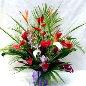BOUQUET- Anyday Bouquet