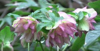 arizona winter annuals flowering plants
