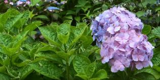 flowering plants for outdoors