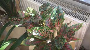 house exotic plants