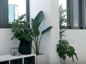indoor plants safe for cats