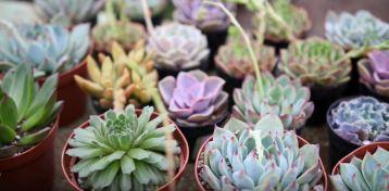 small succulents